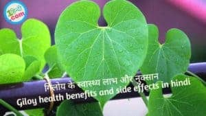 गिलोय के स्वास्थ्य लाभ और नुक्सान Giloy health benefits and side effects in hindi
